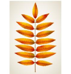 Single autumn rowan leaf vector