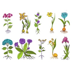 Set of Vintage Flowers - hand drawn vector image