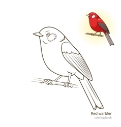 Red warbler bird coloring book vector