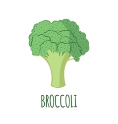Broccoli icon in flat style on white background vector image