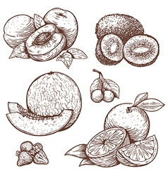 Engraving fruits vector