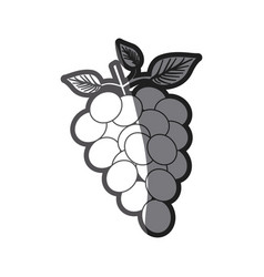Grayscale silhouette of bunch of grapes vector
