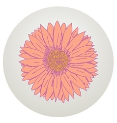 Beautiful gerbera flower vector