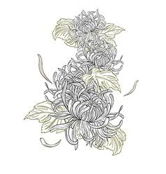 Chrysanthemum flowers vector image vector image