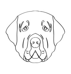 isolated golden retriever avatar vector image