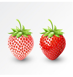 Strawberry and white strawberry pineberry fruit vector