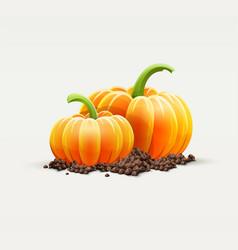Ripe pumpkin vegetables vector