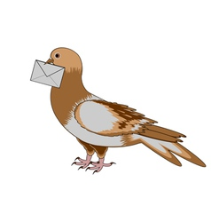 A pigeon with a letter on a white background vector