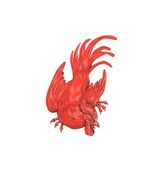 Chicken Rooster Crouching Drawing vector image