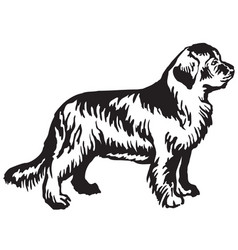 decorative standing portrait of newfoundland dog vector image