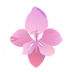 Gladiolus vector