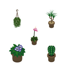 Isometric flower set of grower peyote blossom vector