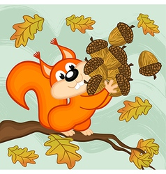 Squirrel gathers acorns vector