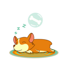 Welsh corgi image isolated in white vector