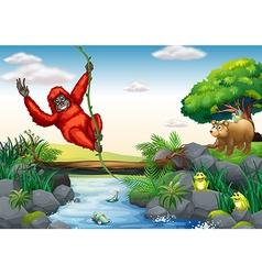 Orangutan and river vector image