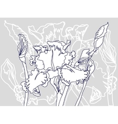 Background with white iris vector
