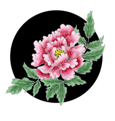 peony flower of japanese style vector image