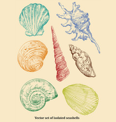 set of isolated seashells vector image vector image