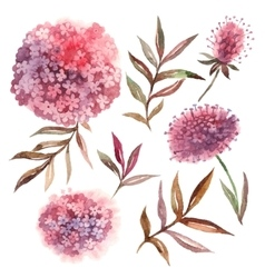 Watercolor floral set Collection with leaves and vector image vector image