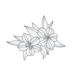 Wild flower monochrome drawing for coloring book vector