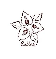 Handsketched bouquet of callas vector