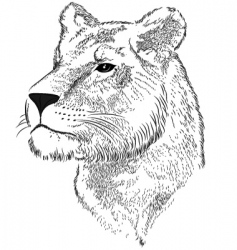 vector face of a lioness vector image