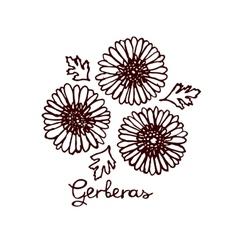 Handsketched bouquet of gerberas vector