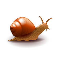 Snail isolated on white vector image vector image