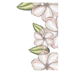 Colorful floral background of white malva flowers vector