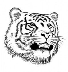 vector face of a tiger vector image vector image