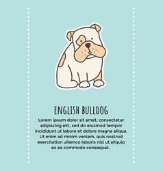 bulldog banner 1 vector image vector image