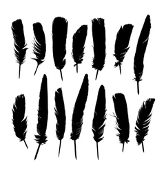 Painted black feathers vector