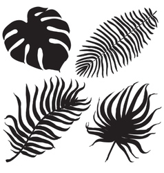 Set with tropical exotic leafes vector