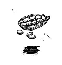Cardamom seed hand drawn vector