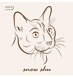 Snow shu cat vector