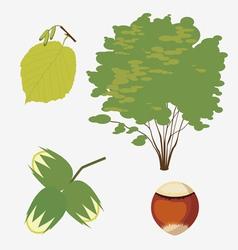 hazel grove vector image