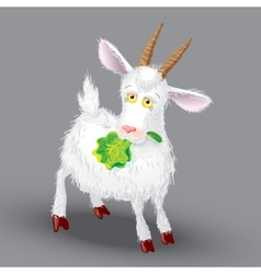 Goat on a gray background in the teeth of lettuce vector