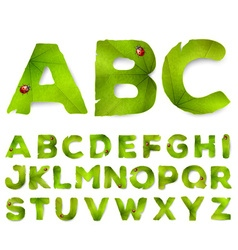 Alphabet letters made from green leaves vector