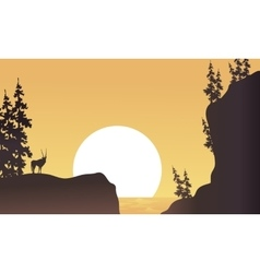 At afternoon antelope silhouette beatiful vector