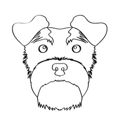 Isolated schnauzer avatar vector