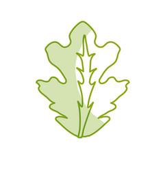 Silhouette delicious leaf lettuce organ food vector