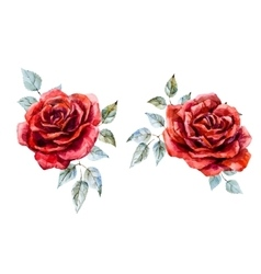 Watercolor red rose vector