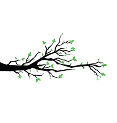 Branch with flowers vector