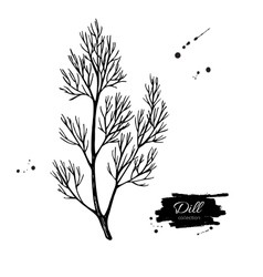 Dill hand drawn isolated vector