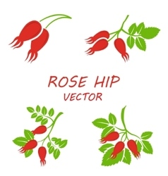 flat rose hip icons set vector image