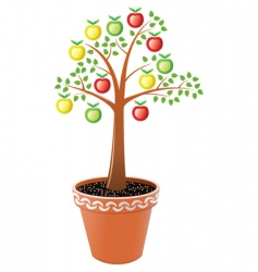 apple tree in pot vector image vector image