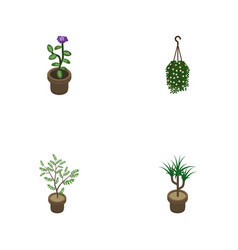 Isometric plant set of fern blossom houseplant vector