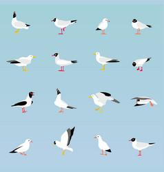 set of beautiful seagulls vector image