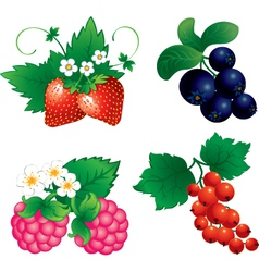 Set of berry vector image vector image