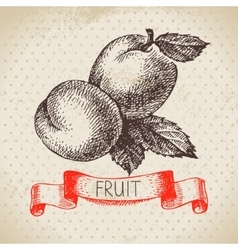 Hand drawn sketch fruit apricot eco food vector